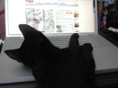 cat-on-a-keyboard